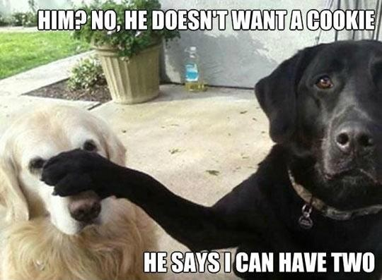 Funny-labs